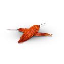 Byadagi chilli celé sušené 30g